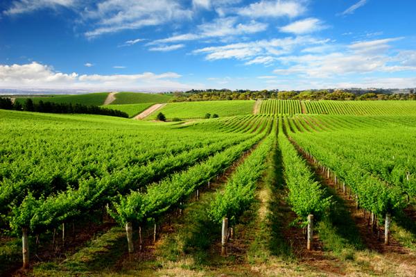 Barossa-Wine