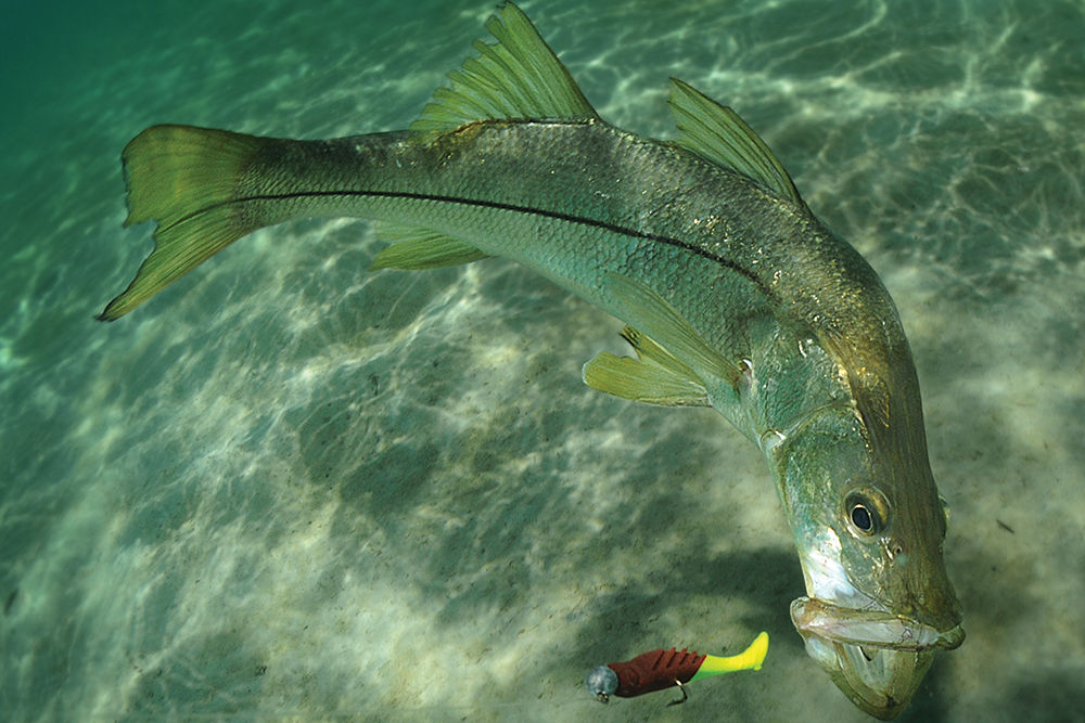 Fish Biting Lure