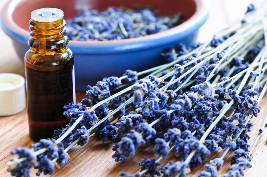 Lavender herb and essential oil