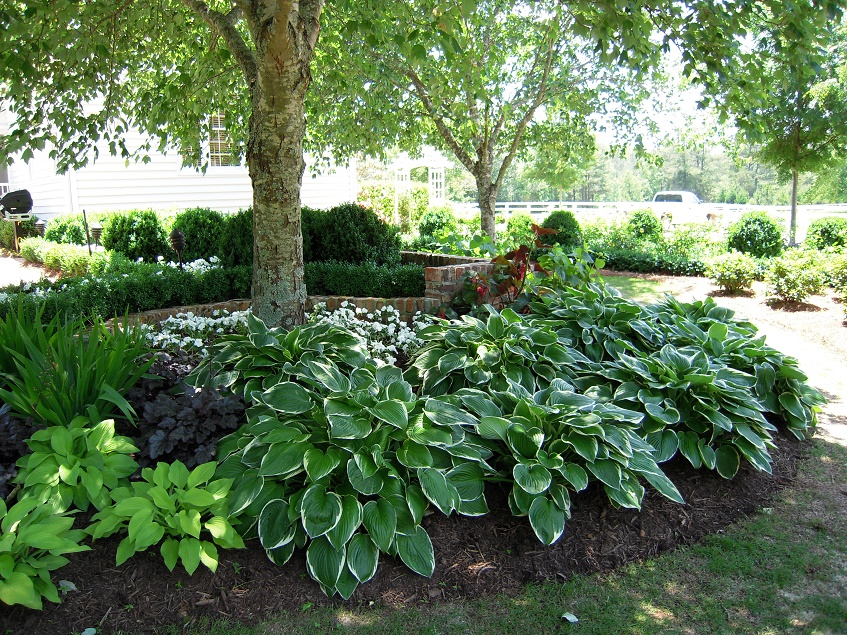 gadren plants for shady areas