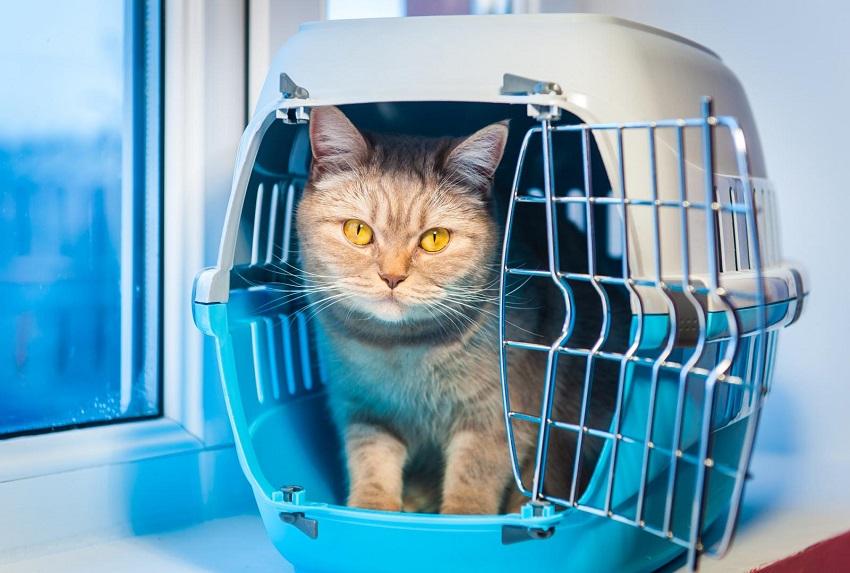 pet transport services