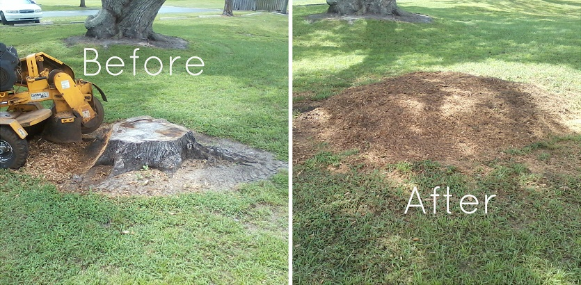 stump grinding and removal 2