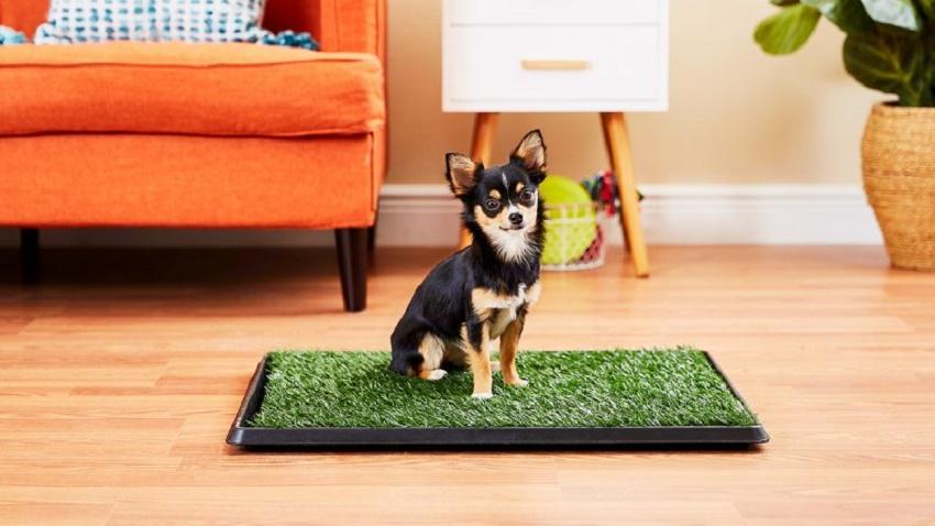 dog toilet training products