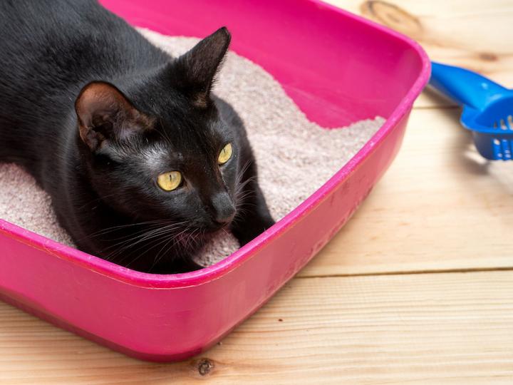 cat-urine-cover